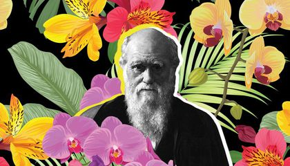 How a Love of Flowers Helped Charles Darwin Validate Natural Selection
