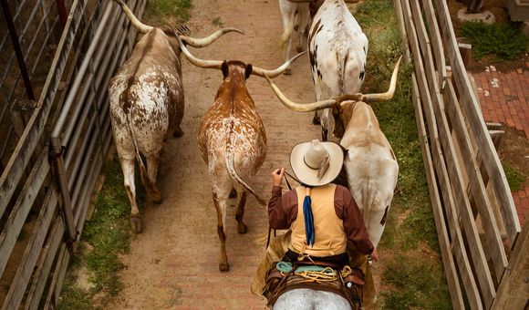 The photo illustrates the lost heritage of the cowboy roundup and cattle drive.