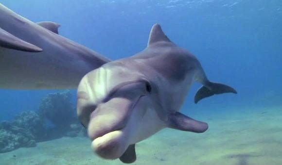 Preview thumbnail for video'Under the Sea With Dolphins