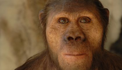 Paleoartist Brings Human Evolution to Life