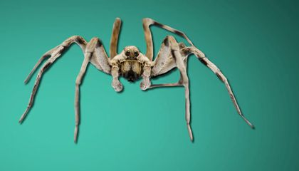 Ask Smithsonian: How Do People Get Phobias?
