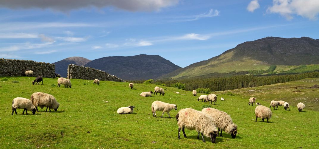 Connemara landscape with sheep