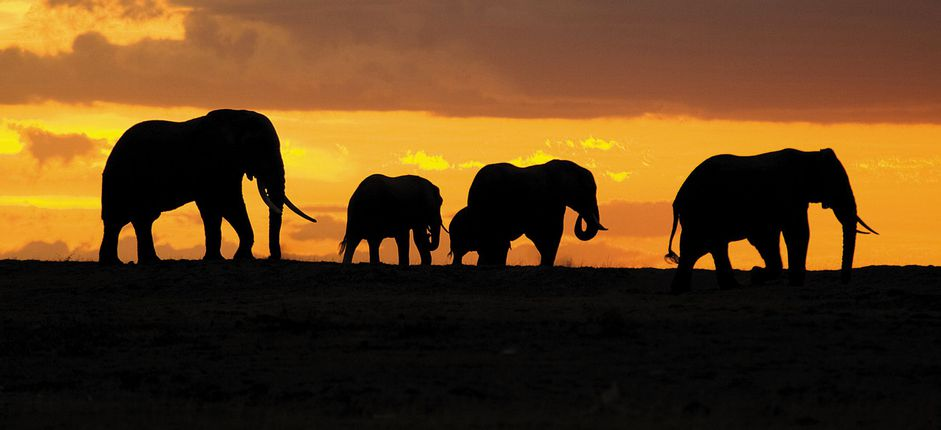 Tanzania Safari <p>Experience the breadth of Tanzania&#39;s riches, from Ngorongoro Crater and the vast plains of the Serengeti,&nbsp;to the Western Corridor and exotic Zanzibar.</p>