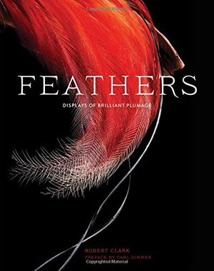 Preview thumbnail for video 'Feathers: Displays of Brilliant Plumage