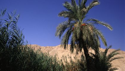 Scientists Grew Palm Trees From 2,000-Year-Old Seeds