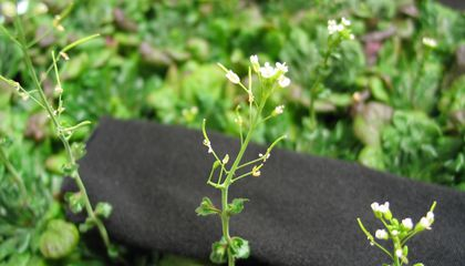 Scientists Discover a New Plant Organ