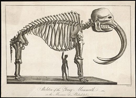 Mammoths and Mastodons: All American Monsters | Science | Smithsonian