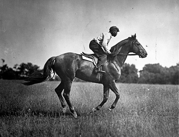 Man o War racehorse