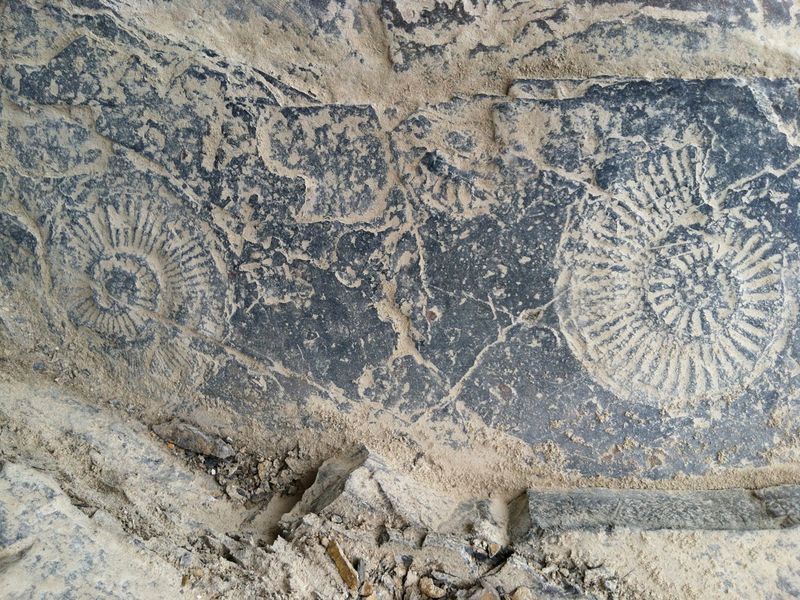PTExtinctionAmmonites
