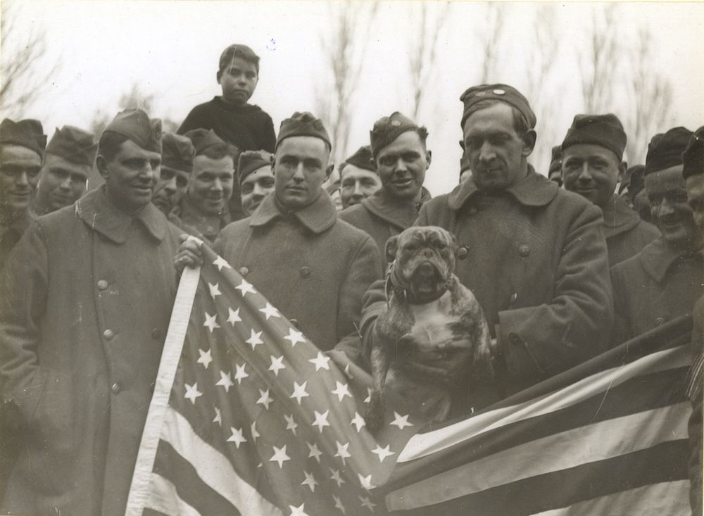 The Animals That Helped Win World War I | History | Smithsonian