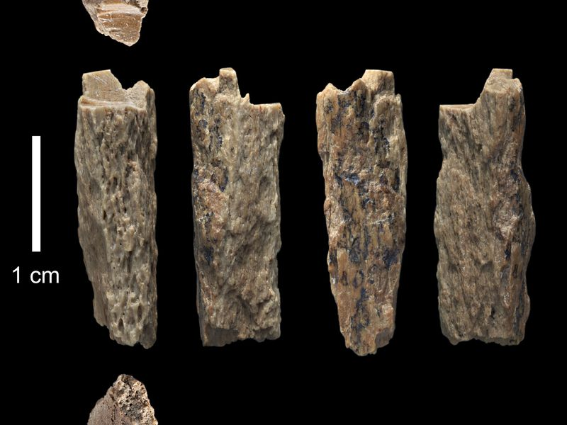 Meet Denisova 11: First Known Hybrid Hominin | Smart News