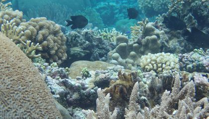 This Coral Has Shown It Can Weather Warmer Waters