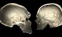 Neanderthal Genes Influence Contemporary Humans' Skull Shape, Brain Size