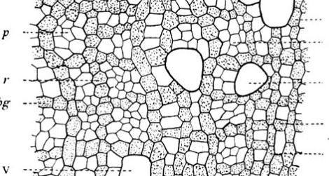 The microstructure of Smets'