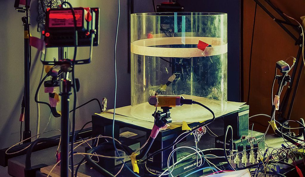 At NYU's Langone Lab, a research station is outfitted with cameras for studying adult mice from different angles as they interact with pups.