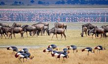 image of Safari in Kenya and Tanzania