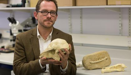 The Event that Wiped out Dinosaurs Also Nearly Did in the Mammals