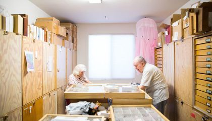 This Couple Just Donated Their Collection of More Than a Million Insects