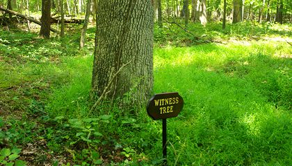 "These Five ""Witness Trees"" Were Present At Key Moments In America's History"