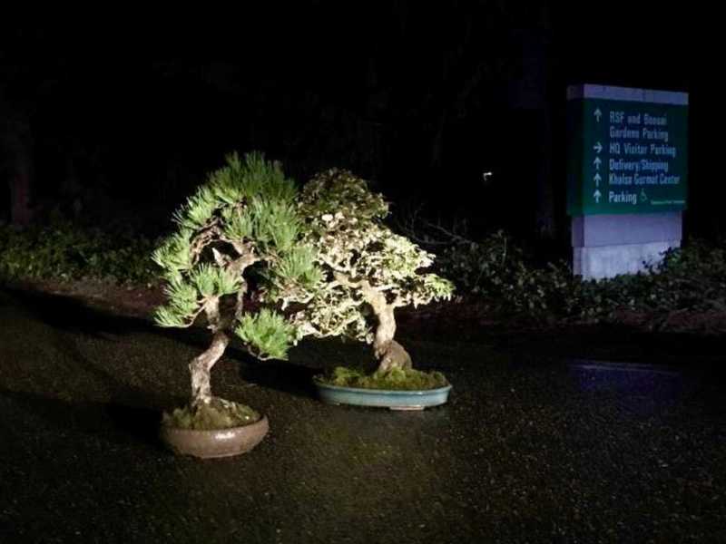 Two Stolen Bonsai Trees Mysteriously Returned To Washington State Museum Smart News Smithsonian Magazine