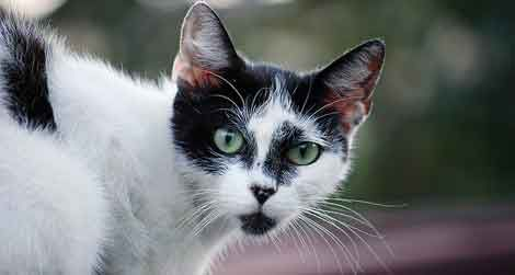 5e78320e Feral cats can roam over great distances, a new study finds.