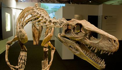 The Rise of Meat-Eating Dinosaurs Is More Complicated Than We Thought