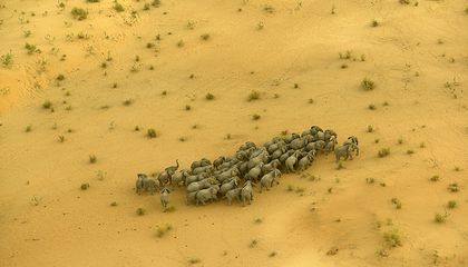 The Race to Stop Africa's Elephant Poachers