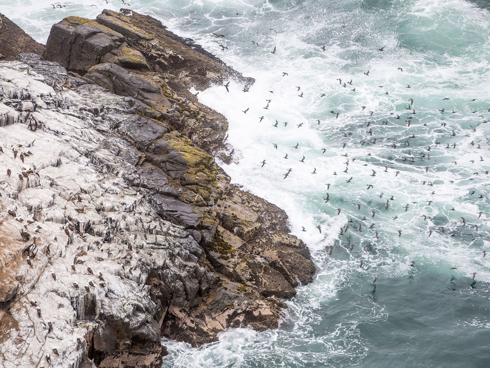 Ancient South American Civilizations Bloomed in the Desert Thanks to Seabird Poop