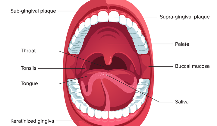 Scientists Study the Mouth Microbiome