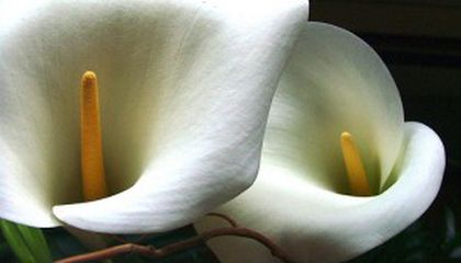 Unexpected Considerations for the Home Funeral