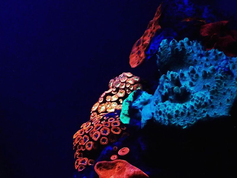 Glowing coral