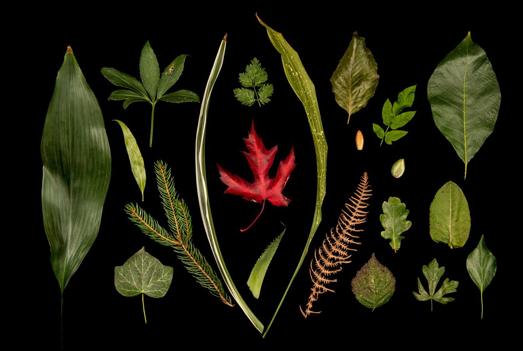 Deciphering the Weird, Wonderful Genetic Diversity of Leaf Shapes