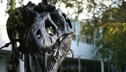 Dinosaur Sighting: Tyrannosaurus Guards Google