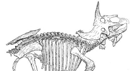 A line-drawing of the Triceratops known as