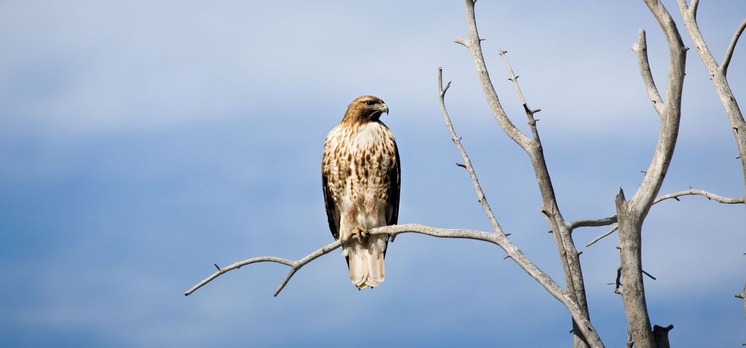 Raptor perched on a tree