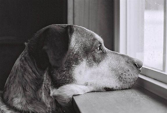 Does he really miss you, or is that a tasty looking squirrel out there?