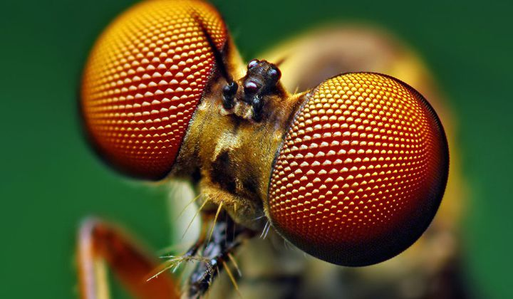 New Solar Cells Are Modeled After a Fly's Eye