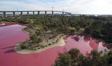 Why Did This Australian Lake Turn Bright Pink?