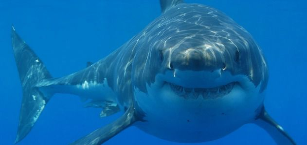 Individual sharks, like people, possess their own distinct personalities.