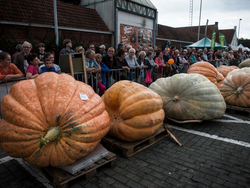 The Secret to Growing the World's Largest Pumpkin | Science