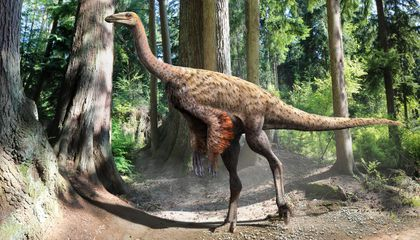 New Fossils Show Ostrich-like Dinosaurs Sported a Coat of Plumage