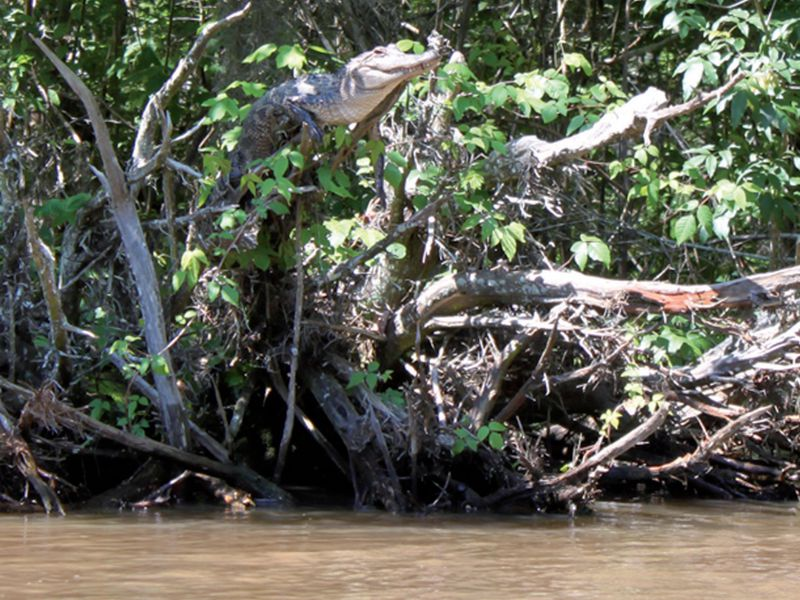 02_12_2014_crocodile tree.jpg