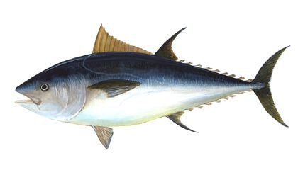 Europe bans Bluefin Tuna Fishing