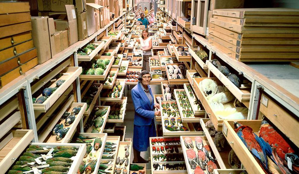 The Smithsonian's vast bird collections are stored in rows and rows of file-like cabinets at the Natural History Museum in Washington, D.C.