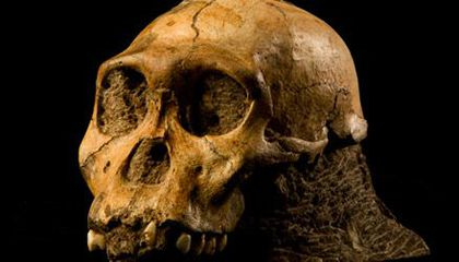 Top 10 Hominid Discoveries of 2011