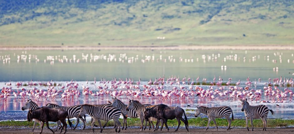 Tanzania Safari <p>Journey from the depths of Ngorongoro Crater and the vast plains of the Serengeti to exotic Zanzibar. You'll discover the breadth of Tanzania's riches, including abundant wildlife, varied cultures, and valued traditions.</p>
