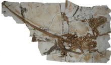 """New Dinosaur Helps Fill Out the Early History of """"Raptors"""""""