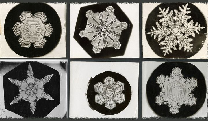 "The original photos from late 1800s by famous snowflake photographer Wilson ""Snowflake"" Bentley, are stored in the Smithsonian Archives. His pictures were instrumental in helping scientists examine snow's crystalline properties. (Erin Malsbury, Smithsonian Open Access, Wilson A. Bentley)"
