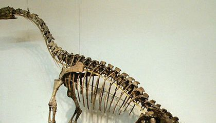 Paleontologists Puzzle Over Possible Dinosaur Bones