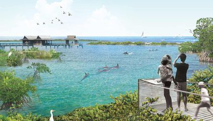 National Aquarium Will Move Dolphins to Seaside Sanctuary by 2020
